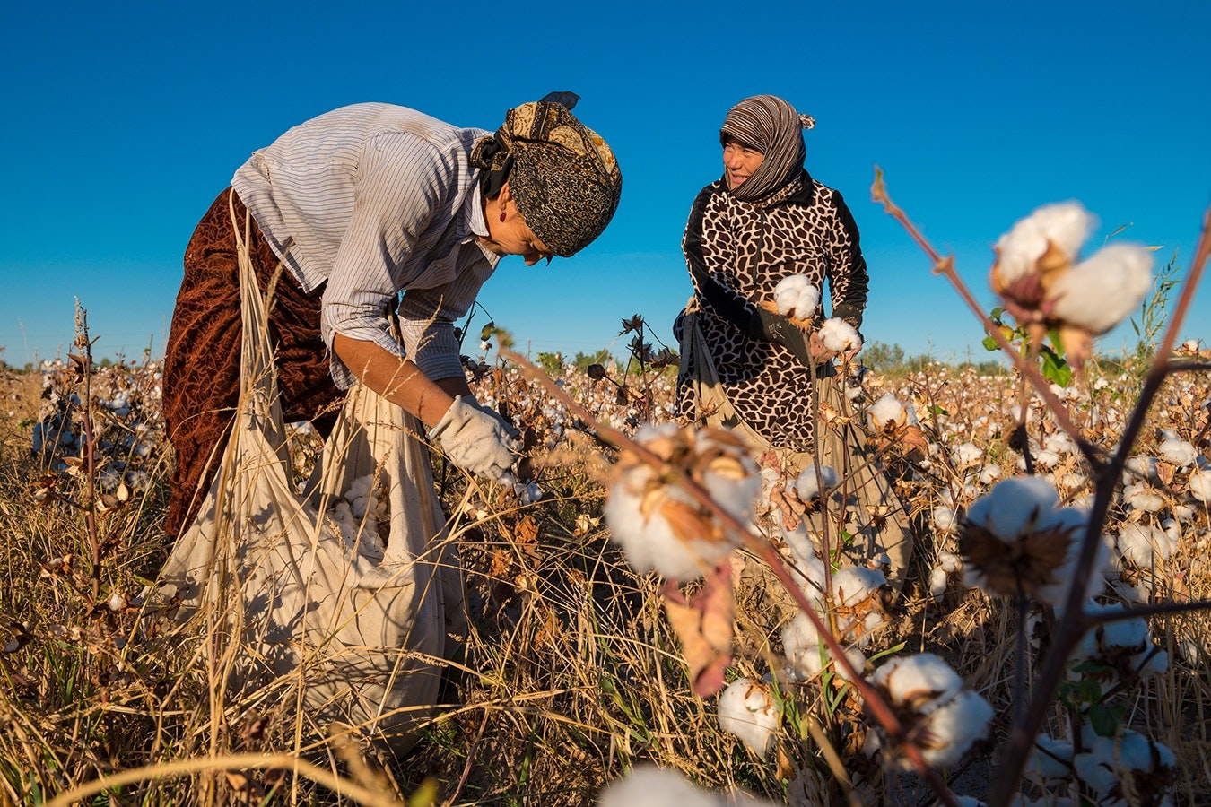 Women in a cotton field