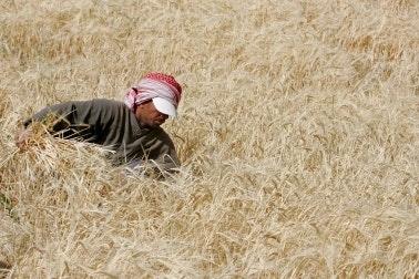 A worker in a field
