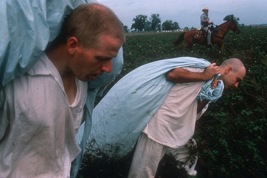 Men with sacks during cotton harvest.