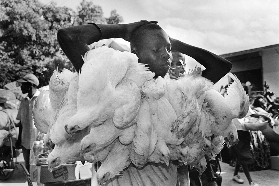 A man carrying many white chickens.