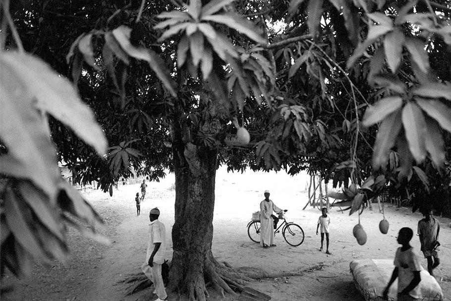 People under a mango tree.
