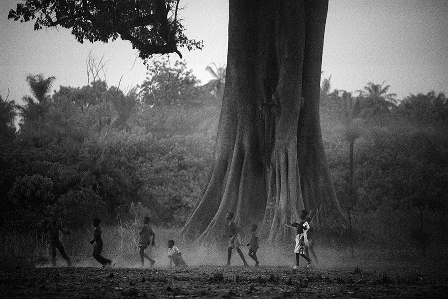 Children play in front of a large tree.