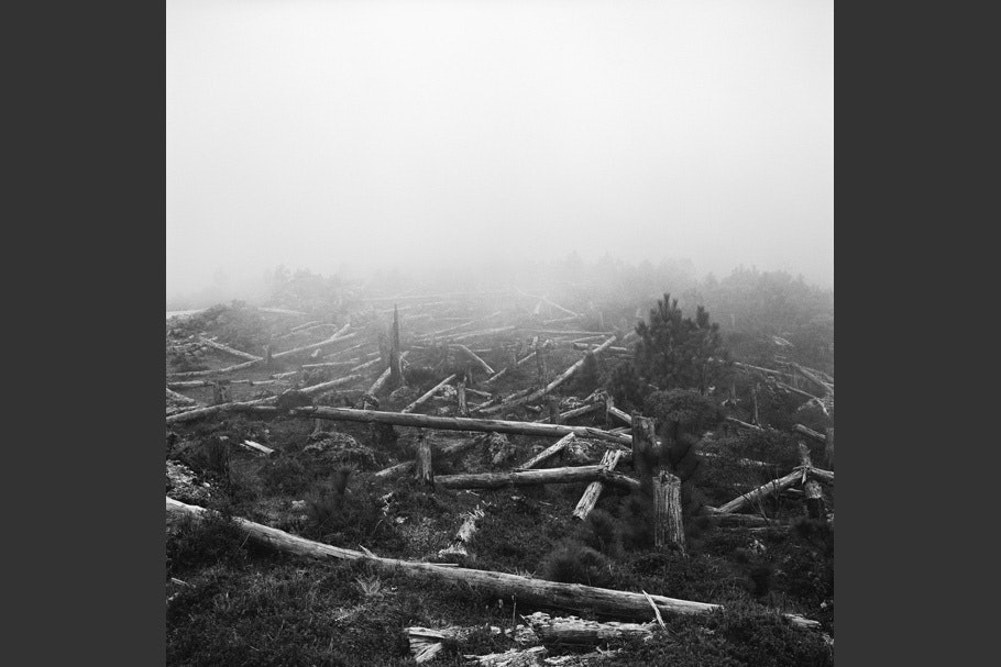 Downed trees in a foggy landscape.