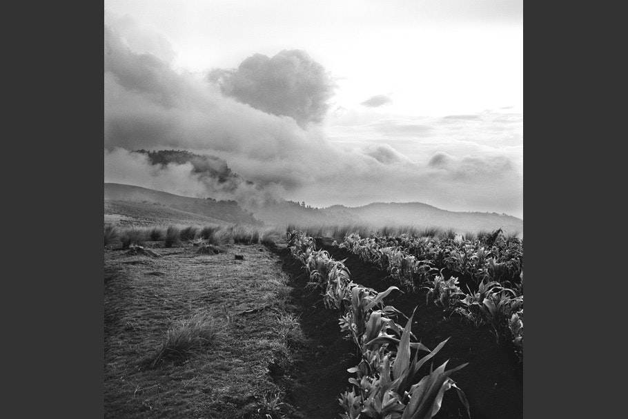 A landscape with crops and dramatic clouds.