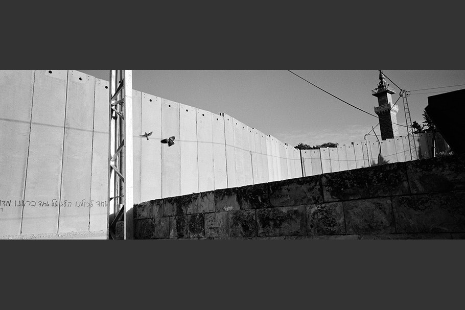Panorama of the wall with birds.