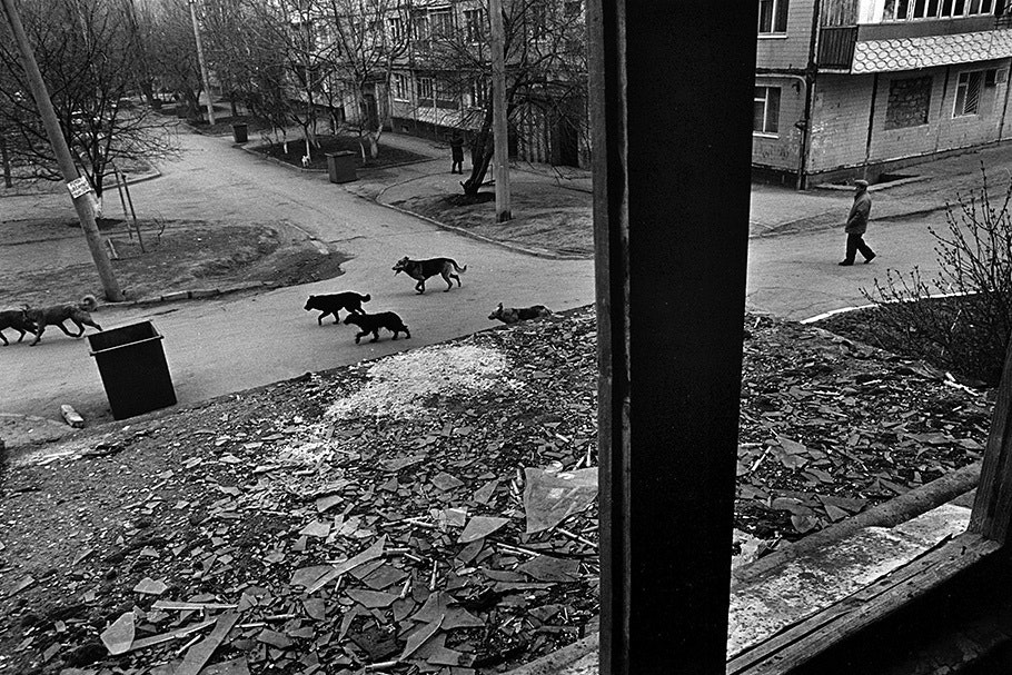 View of rooftop and dogs in a street.