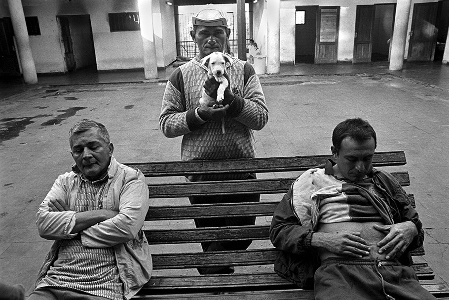 Three men and a puppy.