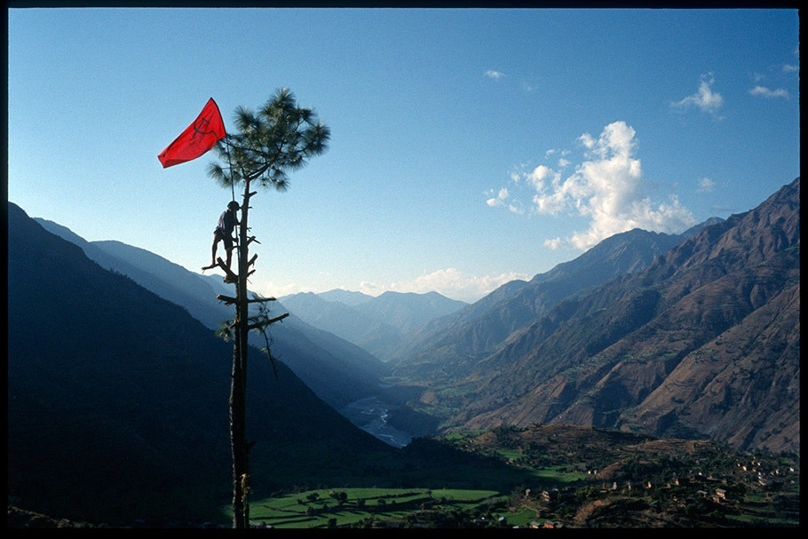 Tree with man and red flag.