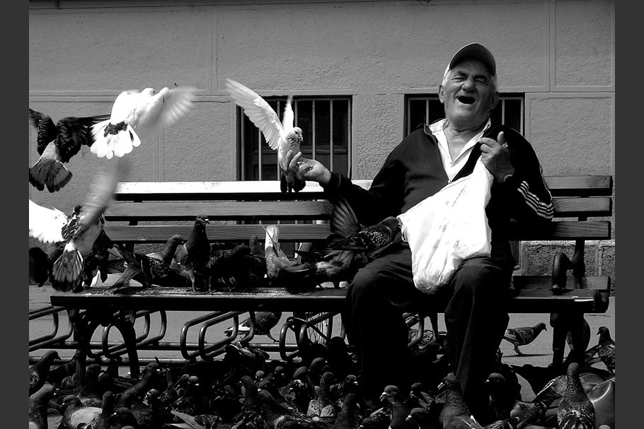 Man on bench with pigeons.