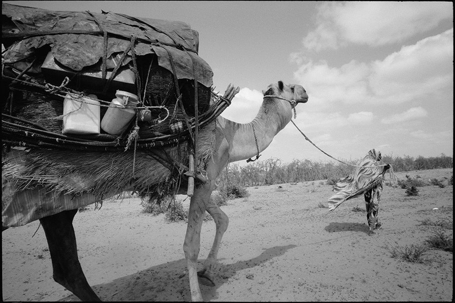 Camel with supplies.