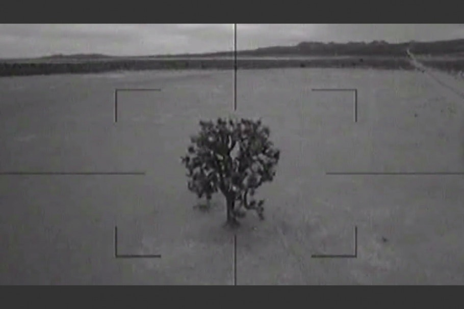 Tree viewed through gunsight
