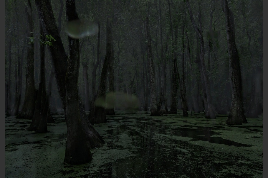 A swamp at night