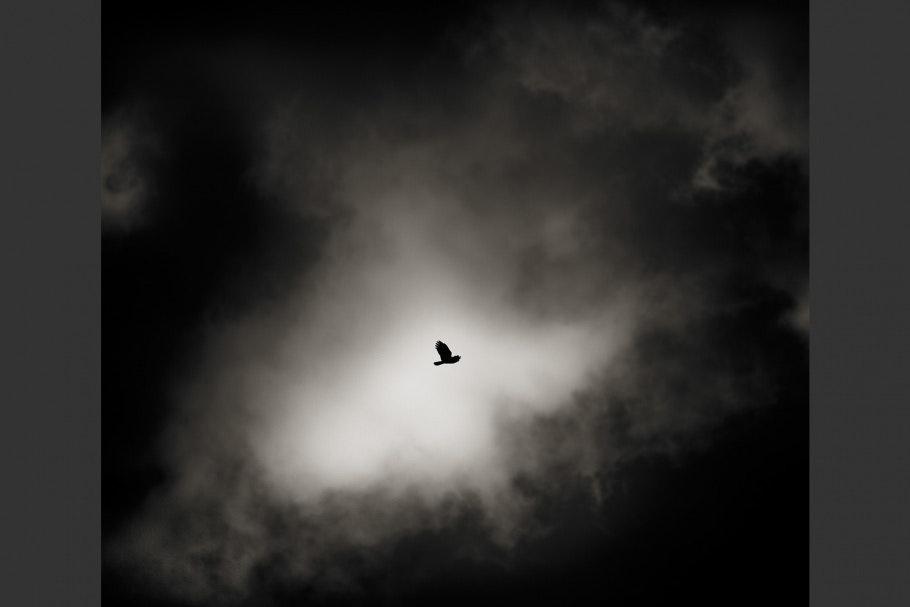 A bird flies in the sky