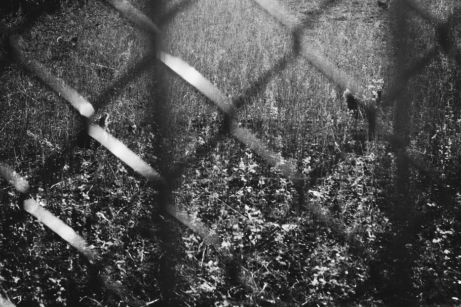 A field viewed through a chain-link fence