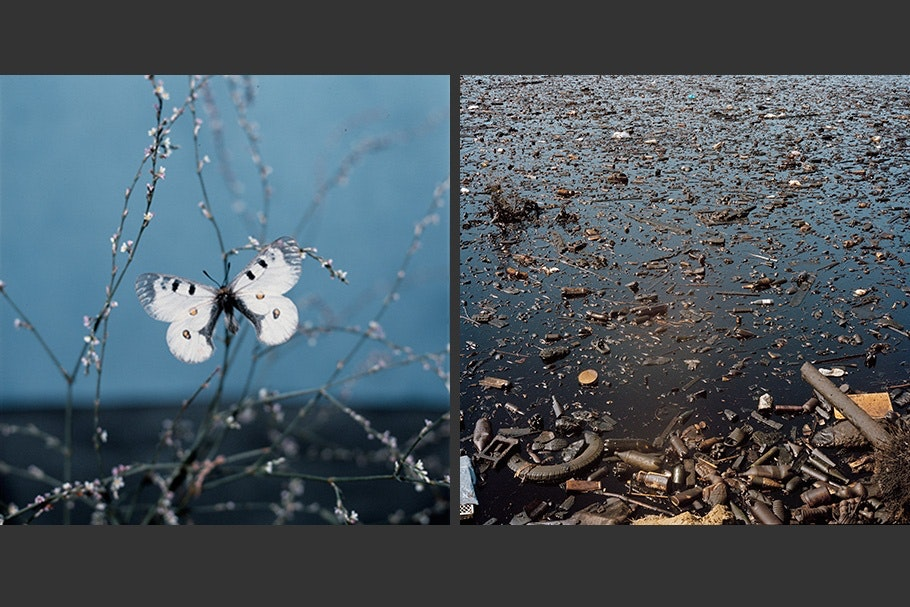 An image of a butterfly next to an image of a polluted lake.