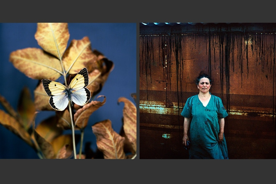An image of a butterfly next to an image of a woman.