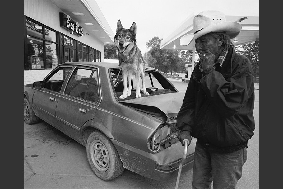 A wolf standing on a car.