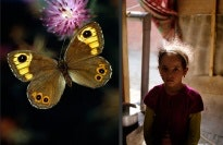 An image of a butterfly next to an image of a girl.
