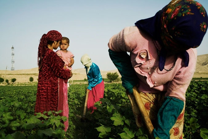 Women harvesting cotton.