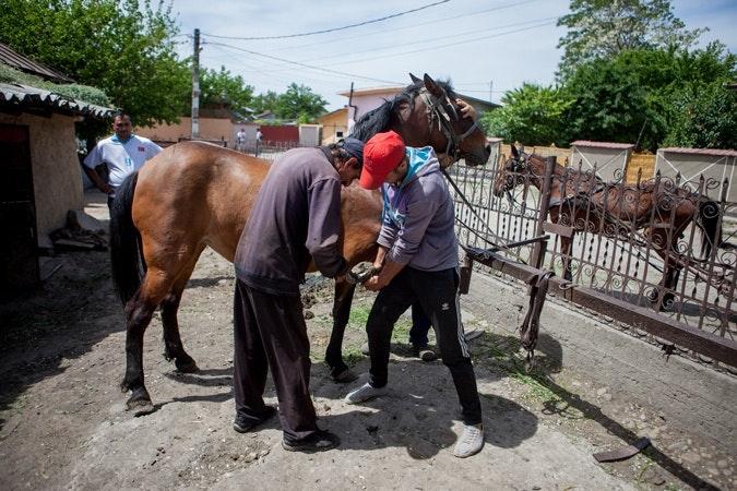Men tending to a horse