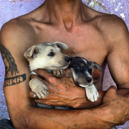 A man holding puppies