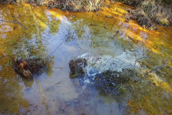 Swamp with dirty water